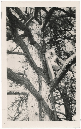 up a tree again (edit)