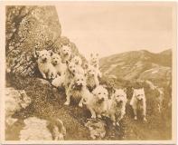 eleven terriers