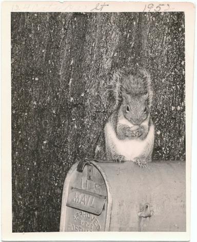 pet squirrel (front)