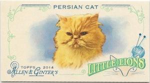 persian (front)